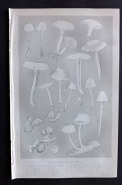 Intellectual Observer 1866 Botanical Print. Ferruginous Spored Agarics. Fungi